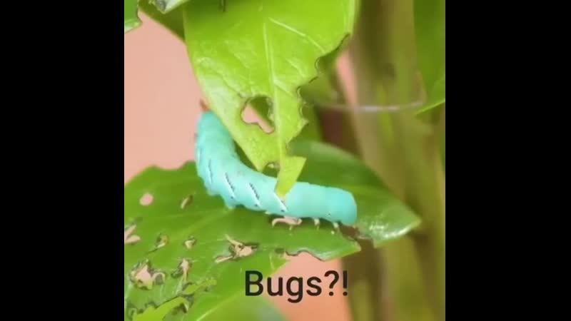 Лайфхаки для растений ????