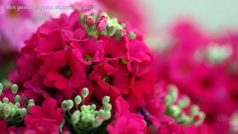 Где и какие цветы сажать?