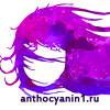 Антоцианин Anthocyanin Нижний Новгород, Россия
