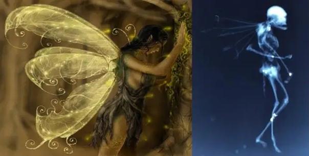 Опубликован рентгеновский снимок странного существа с крыльями