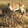 Охотничье хозяйство Паксан