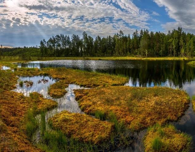 Необъяснимое на Юганских болотах. Мистическая история, рассказанная биологом