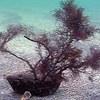 Флешмоб. Кормите море камнями ! :)  :)  :)