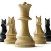 Волгоградская шахматная федерация