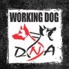 Working Dog DNA