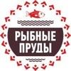 РЫБНЫЕ ПРУДЫ   Рыбалка в Петербурге