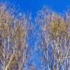 Лесной Танец [Lesnoy Tanets]