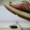 Уничтожение клопов и тараканов в Челябинске