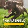 """Помощь животным """"AnimalRepublic"""""""
