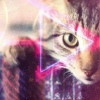 ART CAT Сохраненки