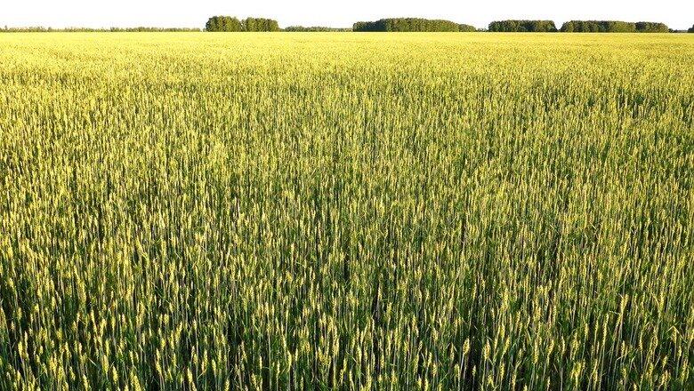 Сельское хозяйство Приморья активно развивает экспортную составляющую  Продукция сельского хозяйства, произведенная аграриями Приморского края, пользуется все... [читать продолжение]