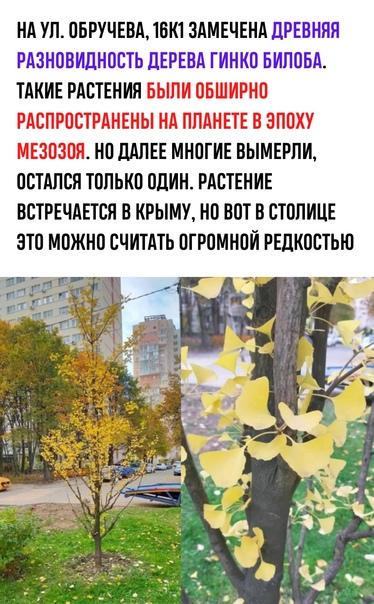 Встречали это растение в Москве? Москва