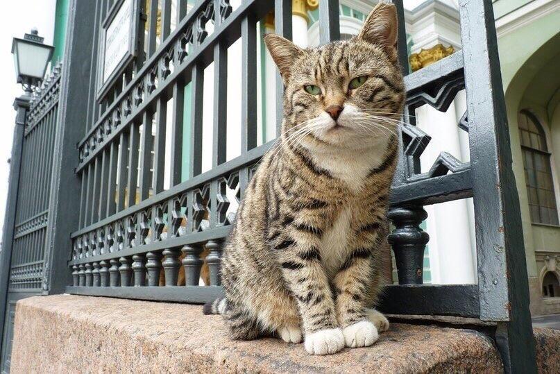 Кошачий Петербург: интересные места в городе, посвящённые кошкам