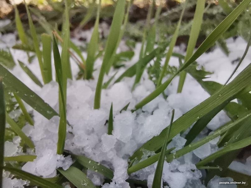 Фотофакт: суровый апрельский снег. А что с погодой в выходные?