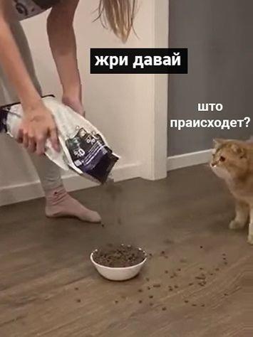 Доигpaлcя пyшиcтый!????