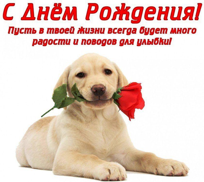 Сегодня поздравляем с Днем Рождения: Екатерина Лебедева ([id182021207|@id182021207]),