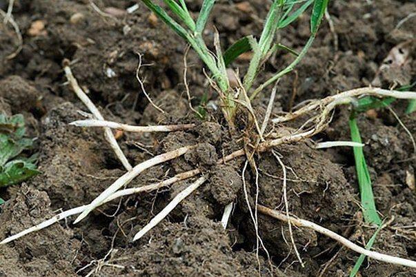 Скоро начнётся активный рост трав. Поэтому, думаю, многим кстати придутся советы...