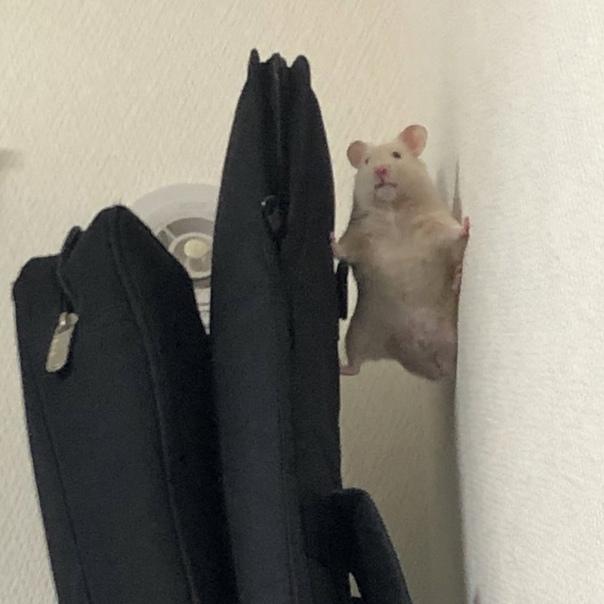 Полчаса искала своего питомца по квартире, в итоге...