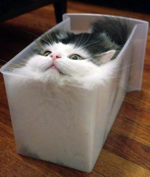 Поддерживаю теорию,что коты это просто жидкость.????