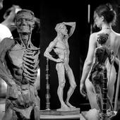 Курс «Пластическая анатомия фигуры человека»