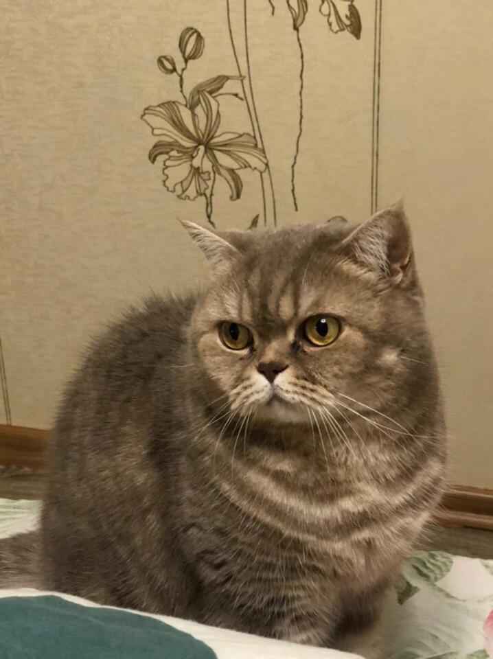 СРОЧНО  Найден кот(ка) на трассе, нужна ПЕРЕДЕРЖКА
