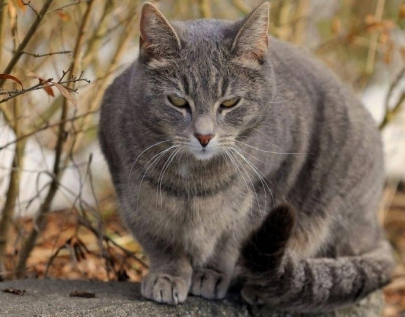 Выводил его на улицу пожилой мужчина. Огромный, серый кот с лапами толщиной в по...
