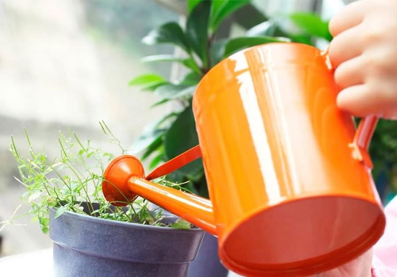 Глюкоза — лучшее «топливо» для растений