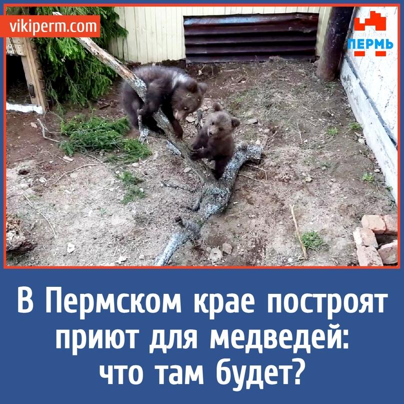 В Пермском крае построят приют для медведей: что там будет?
