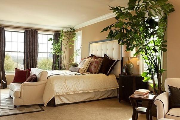 Растения для спальни.