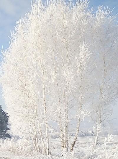 Елена Т-Б, Красноярск