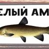 Белый Амур - рыболовный магазин (г. Орёл)