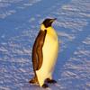 Antarctica200.ru