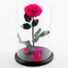 Роза в колбе JOY&ROSE Идеальный подарок девушке