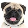 Интернет-портал о животных ZOOproject.ru