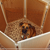 Домашнее ограждение для собак Антимонстр