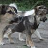 Группа помощи бездомным животным в Перми