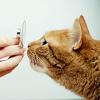 Ветеринарная клиника Астрахань | Animal clinic