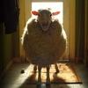 КиноСтейк от Стильной Овцы-Зомби