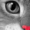 Catsmob