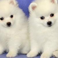 ♥Стихи про собак♥