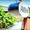 Amshin Amshin