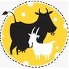 Онлайн-школа сыроваров КоКо/Домашнее сыроделие