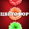 Доставка цветов в Сыктывкаре.ЦВЕТОФОР. Опт.Цветы