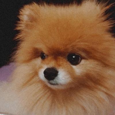 Orange Dog, Краснодар