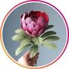 Доставка цветов в Омске. Экзотик Эльвар