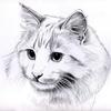 Зоогостиница для кошек Cat Тown в СПб