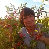 Elena Golnikova