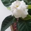 1cvetok.ru: цветы и растения