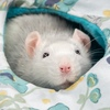 RatCraft - гамаки для крыс и другие аксессуары