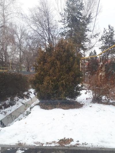 Мара Калжанов, Алматы